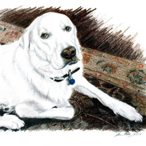 drawing of white dog